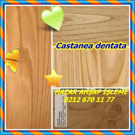 catsCastanea dentata232