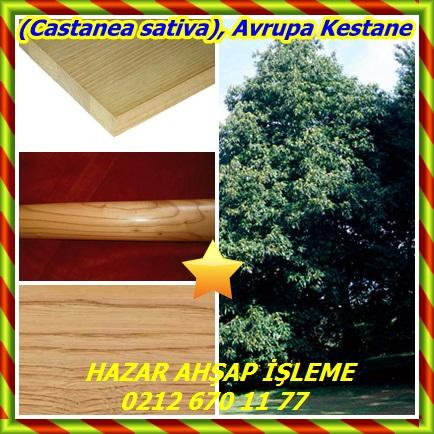 cats(Castanea sativa), Avrupa Kestane434