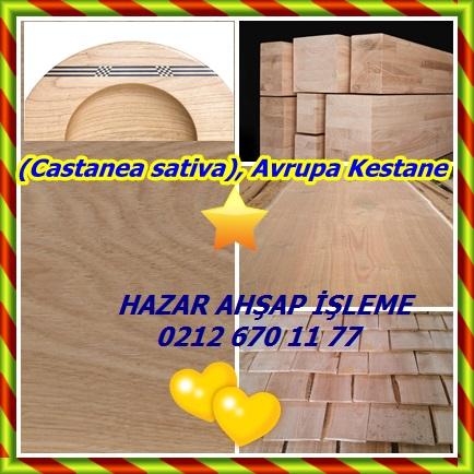 cats(Castanea sativa), Avrupa Kestane567