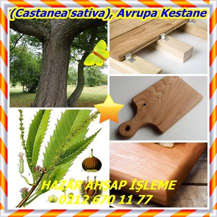 cats(Castanea sativa), Avrupa Kestane7866