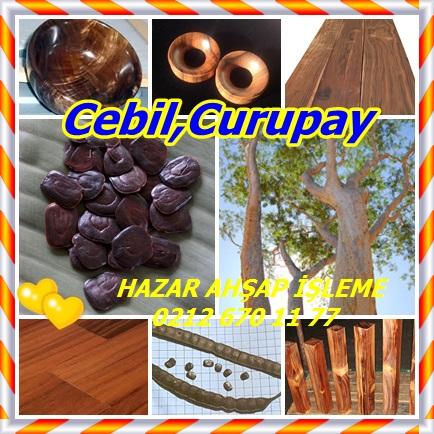 catsCebil, Curupay223