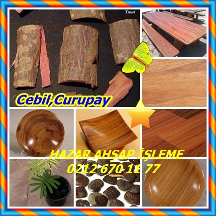 catsCebil, Curupay656