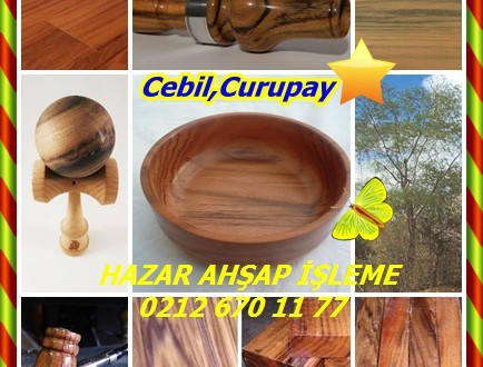Cebil,Curupay,Anadenanthera colubrina, (syn Anadenanthera macrocarpa.)