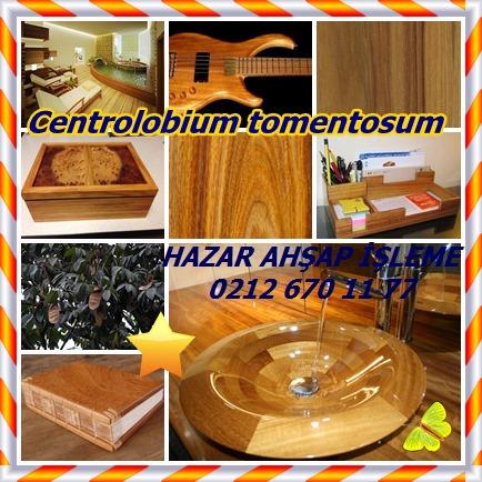 catsCentrolobium tomentosum356