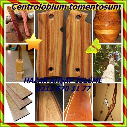 catsCentrolobium tomentosum3655
