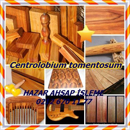 catsCentrolobium tomentosum445
