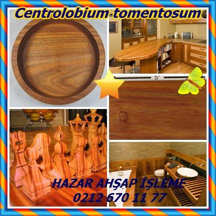 catsCentrolobium tomentosum45258