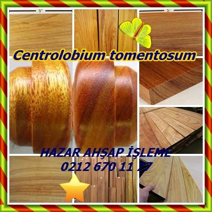 catsCentrolobium tomentosum544