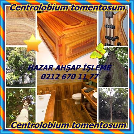 catsCentrolobium tomentosum56555