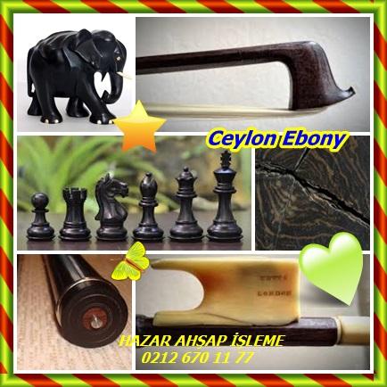 catsCeylon Ebony12