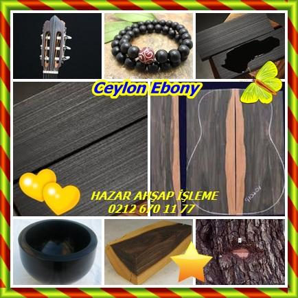 catsCeylon Ebony2332