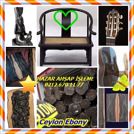 catsCeylon Ebony432