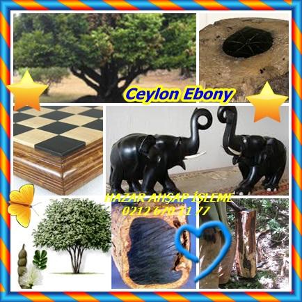 catsCeylon Ebony44