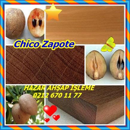 catsChico Zapote12