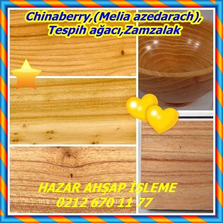 catsChinaberry,(Melia azedarach),Tespih ağacı,Zamzalak332