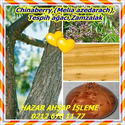 catsChinaberry,(Melia azedarach),Tespih ağacı,Zamzalak55