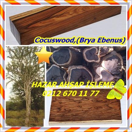 catsCocuswood,(Brya Ebenus)33