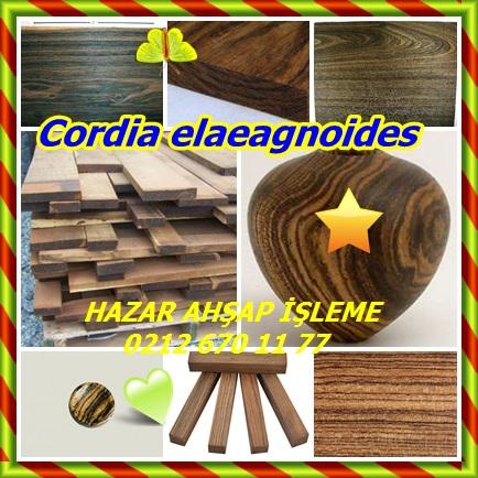 catsCordia elaeagnoides211