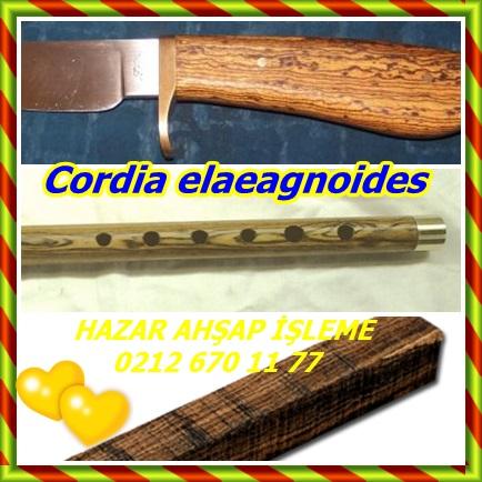catsCordia elaeagnoides3221