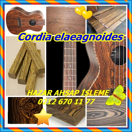 catsCordia elaeagnoides332