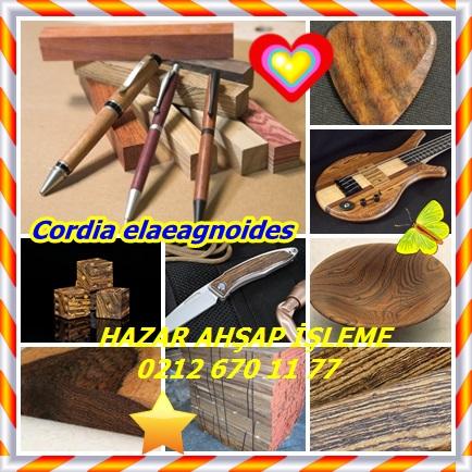 catsCordia elaeagnoides432