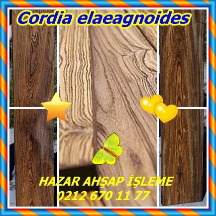 catsCordia elaeagnoides65