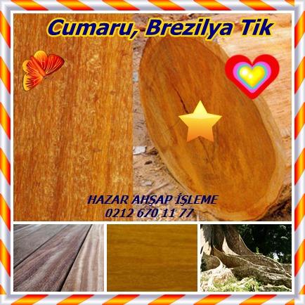 catsCumaru, Brezilya Tik34