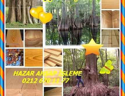 Cypress,Selvi,Baldcypress,(Taxodium distichum),Kel servi, Baldcypress, Ortak kel servi, Güney kel selvi, Yaprak Döken selvi