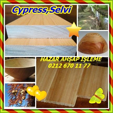 catsCypress,Selvi22