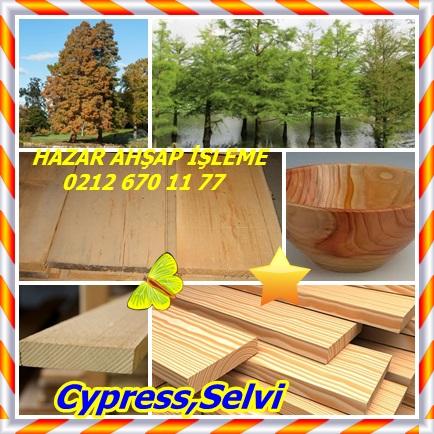 catsCypress,Selvi33