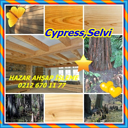 catsCypress,Selvi666