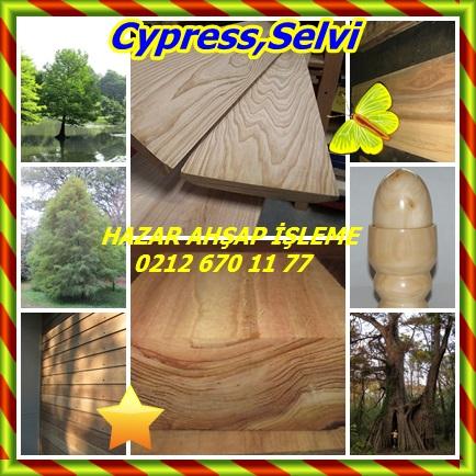 catsCypress,Selvi765