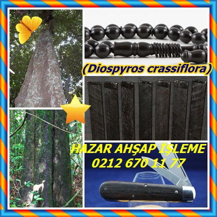 cats(Diospyros crassiflora)2