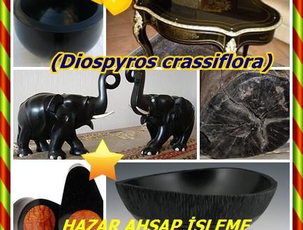 Gaboon Abanoz,Afrika Abanoz,(Diospyros crassiflora),Nijerya Abanoz,Kamerun Abanoz,cubaga,mevini,mopini