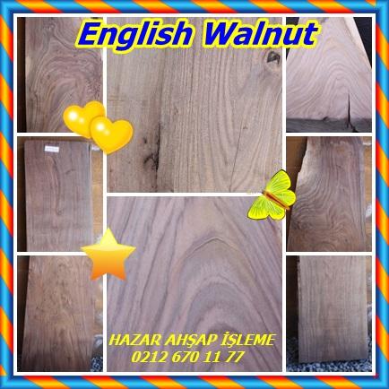 catsEnglish Walnut