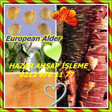 catsEuropean Alderhh