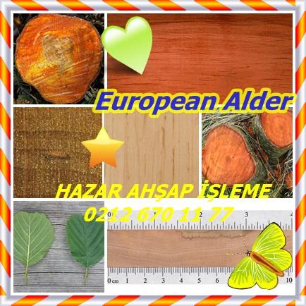 catsEuropean Aldersdfg