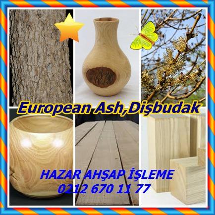 catsEuropean Ash,Dişbudak,22