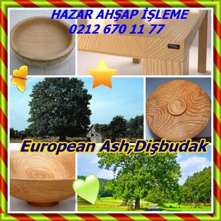 catsEuropean Ash,Dişbudak,52
