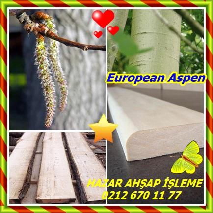 catsEuropean Aspen323