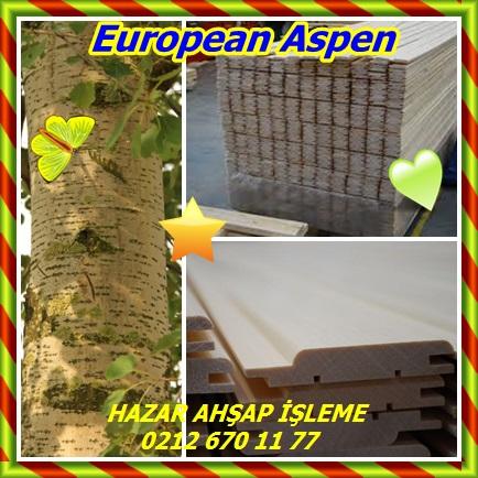 catsEuropean Aspen456