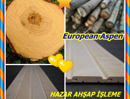 European Aspen,Common Aspen,(Populus tremula),Kavak Kereste,Titreme Aspen,