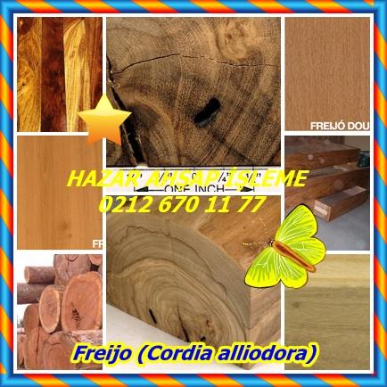 catsFreijo (Cordia alliodora)54