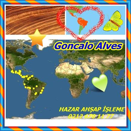 catsGoncalo Alves33
