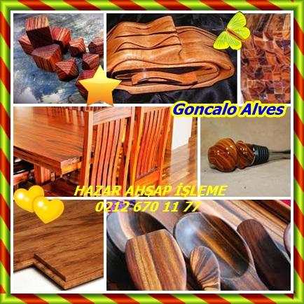 catsGoncalo Alves3444