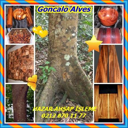catsGoncalo Alves456