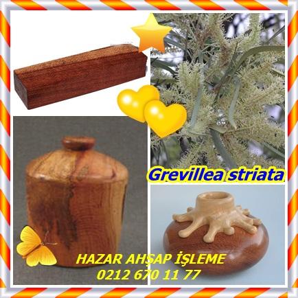 catsGrevillea striata77