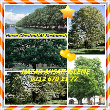 catsHorse Chestnut,At Kestanesi 44