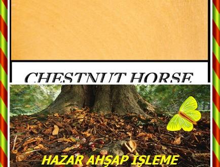 Horse Chestnut,At Kestanesi , (Aesculus hippocastanum),California buckeye, Ohio buckeye ve buckeye olarak bilinir.