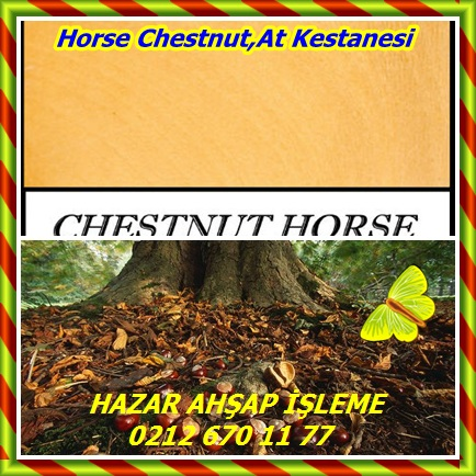 catsHorse Chestnut,At Kestanesi 544
